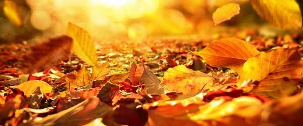 Herbstlaub im Garten