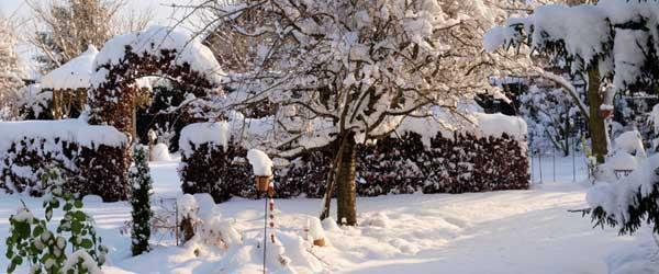 Schneebedeckter garten