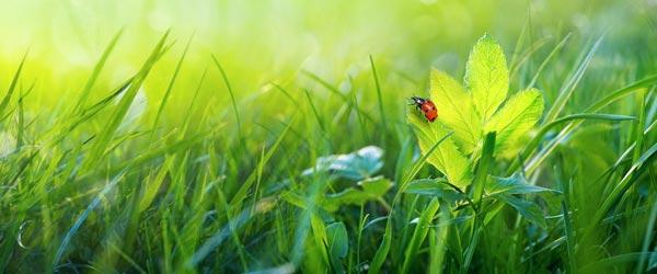 frischer Rasen im Frühjahr