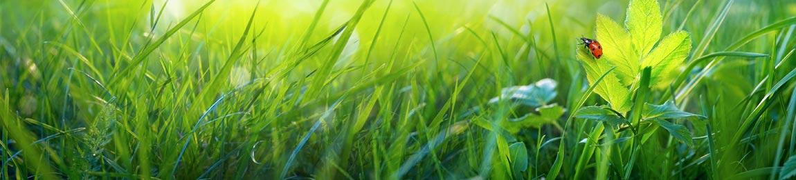 saftiger Rasen im Frühjahr